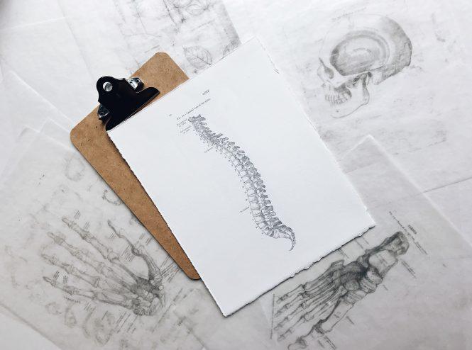 Kręgosłup spine body anatomy